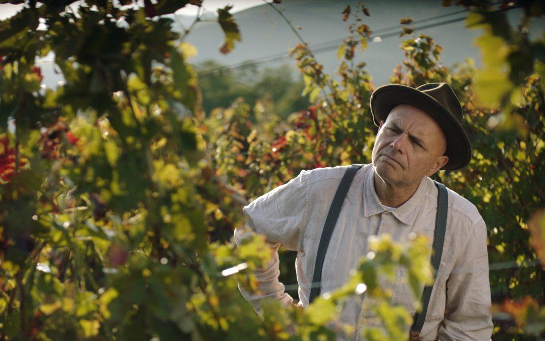 Episode 516 Wine, Epiphany, Trust & Simplicity
